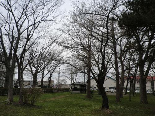 2013-5-5ケヤキ公園