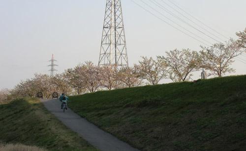 2013-5-12中川原堤防の桜10