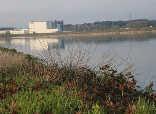 2013-5-12中川原堤防の桜13