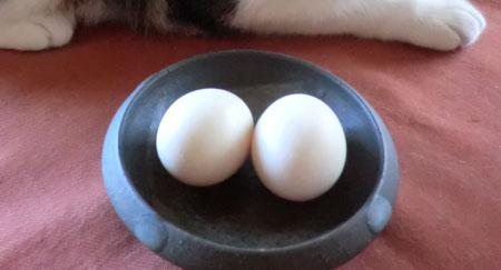 2013-10-4ウコッケイの卵