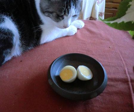 2013-10-4ウコッケイの卵②