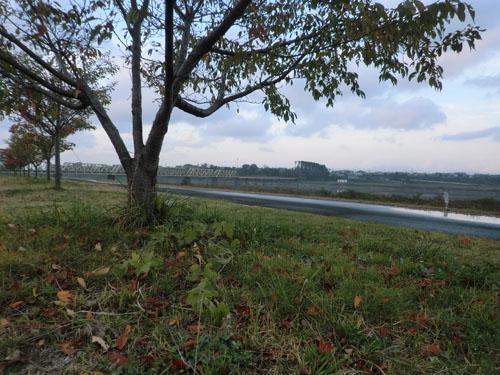 2013-11-3中川原堤防散策