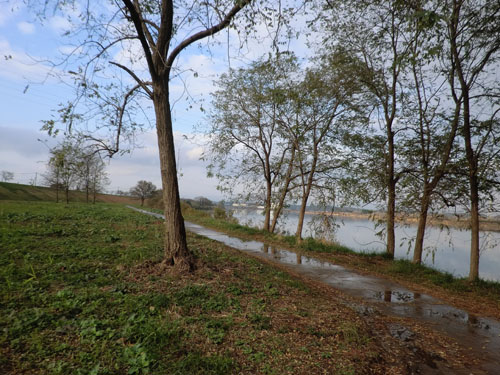 2013-11-3中川原堤防散策⑦7
