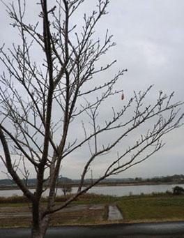 2013-11-3中川原堤防散策④