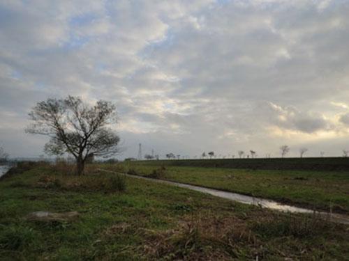 2013-11-3中川原堤防散策11