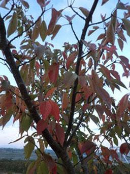 2013-11-3中川原堤防散策②