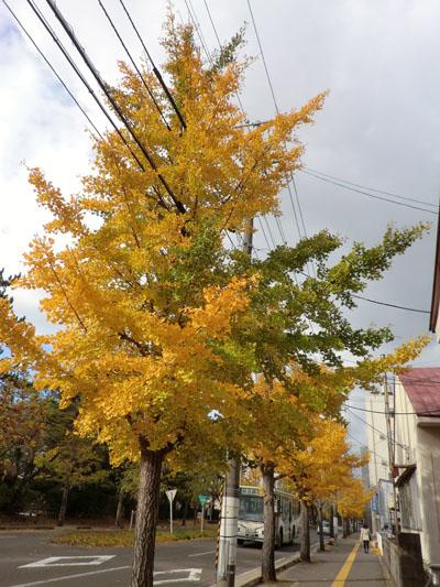 2013-11-8落ち葉④