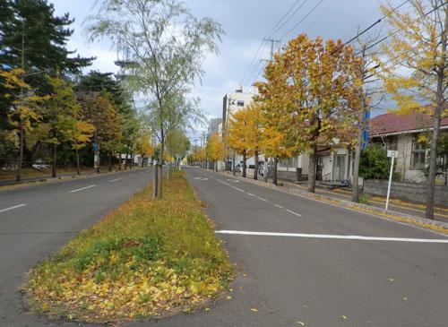 2013-11-8落ち葉③