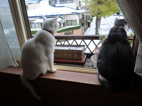 2013-11-13初雪の日④
