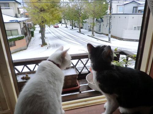 2013-11-13初雪の日②