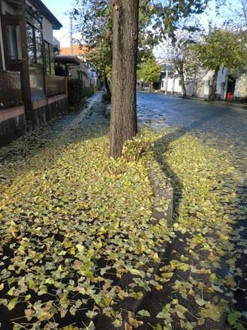 2013-11-19うちの前の街路樹④