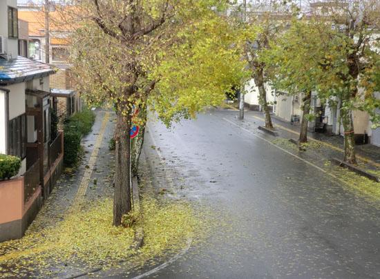 2013-11-19うちの前の街路樹