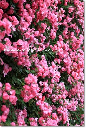 7_20130604174949.jpg