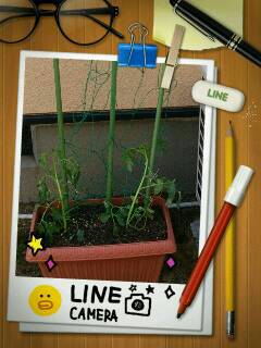 2013 05 16 tomato