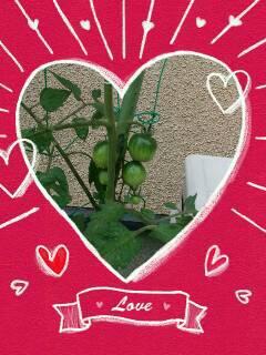 2013 06 25 tomato kajitu