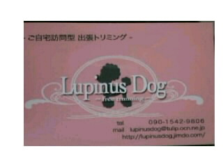 Lupinus Dog