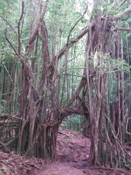 hawaii33.jpg