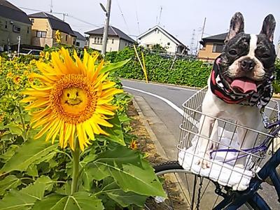 himawari20133_convert_20130819211916.jpg