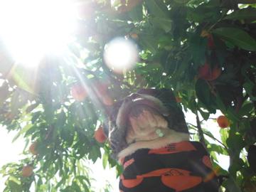 peach11.jpg