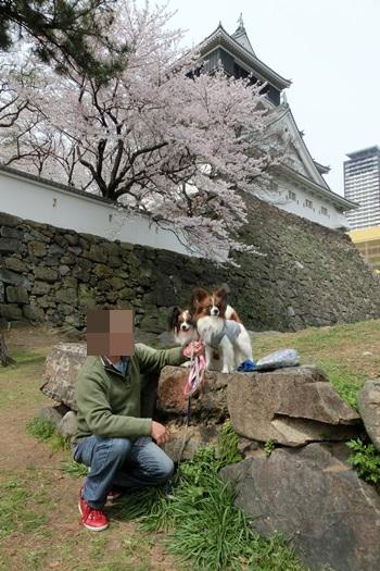 2013324sakura1.jpg