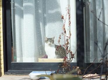 家猫ドロちゃん