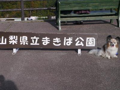 ぶどう狩り4−27