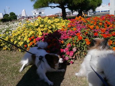 横浜女子会11