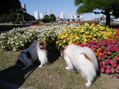 横浜女子会12
