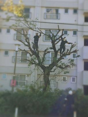 jindaisakura6.jpg