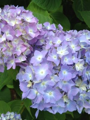 fc2blog_20130601184726d5b.jpg