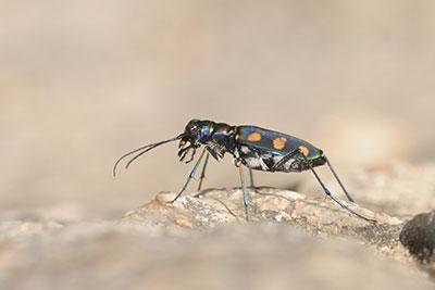 Beetle#1WEB
