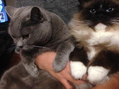 息子と猫達