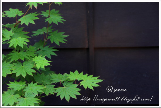 b-IMG_1105.jpg