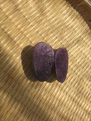 紫いろ_R