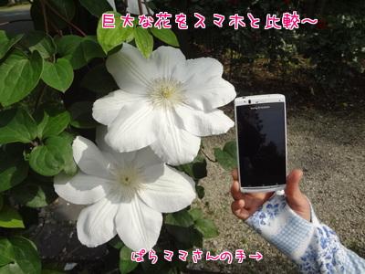 T_4g4FvG7Y0GuZe1369477064_1369477257.jpg