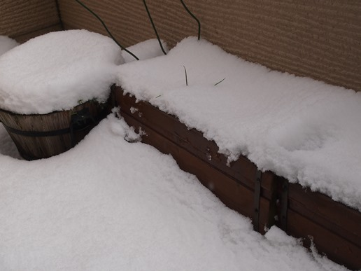 久々に積もった雪の朝