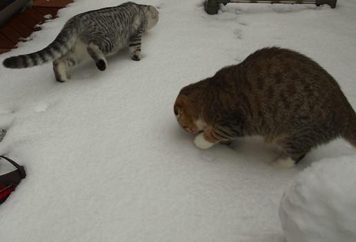 これが雪にゃ?