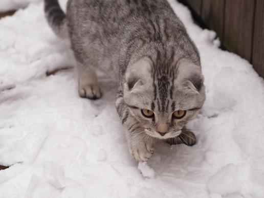 雪っておもしろいにゃ