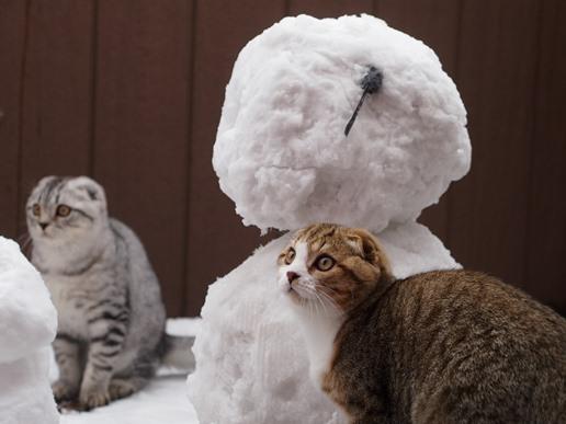 雪大好きにゃん