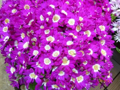 なんかわからんけどきれいな花1