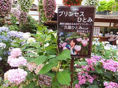 kamo-20130601-18s.jpg