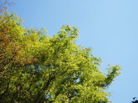 oohito-20130427-07s.jpg
