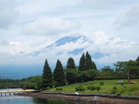 tanuki-20130622-04s.jpg