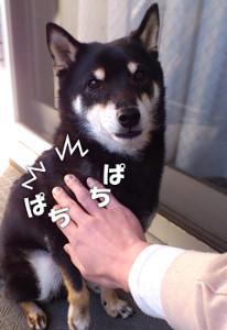 140128_pachi.jpg