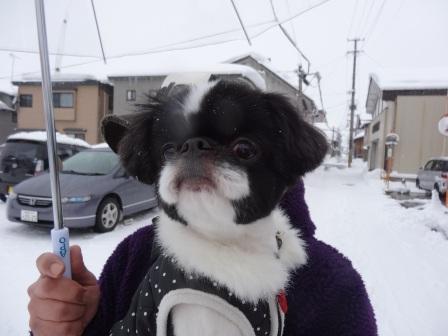 2013犬っこ祭り2