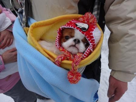 2013犬っこ祭り4