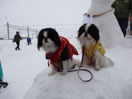 2013犬っこ祭り7