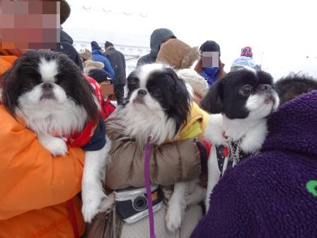 2013犬っこ祭り(3)
