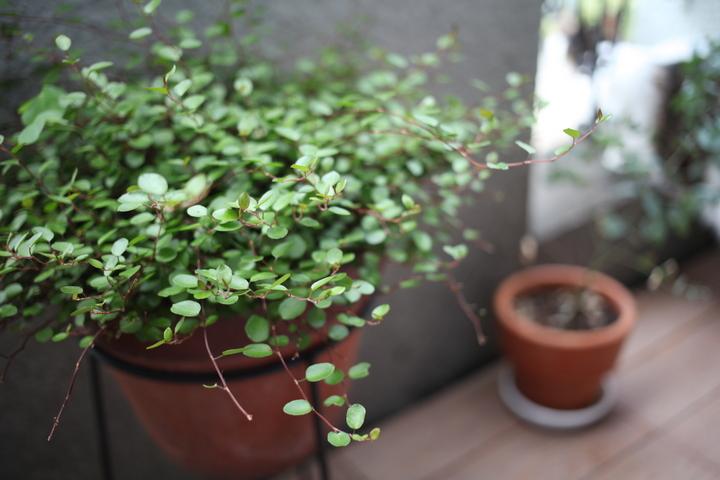 balcony_plant.jpg
