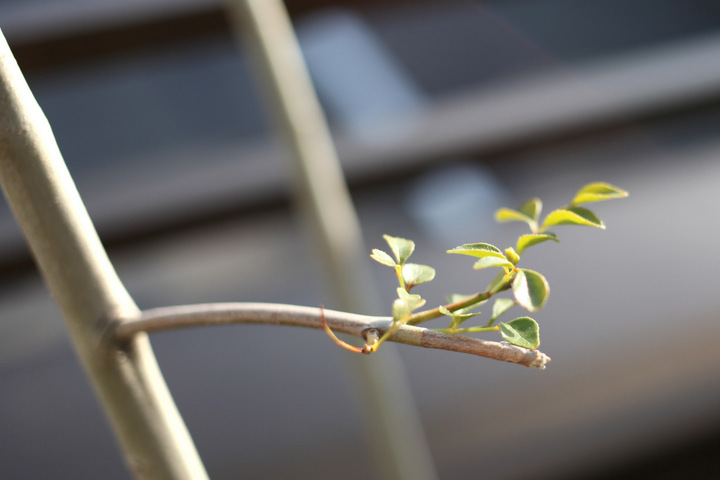 plant5.jpg